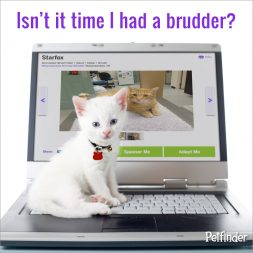 white kitten on a laptop computer