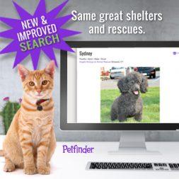 Petfinder's pet search cat at computer