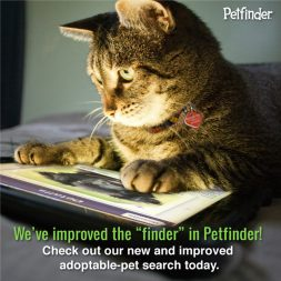 work from home cat petfinder