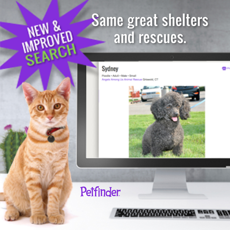 Petfinder's pet search cat at computer