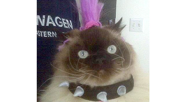 Punk Rock Kitty