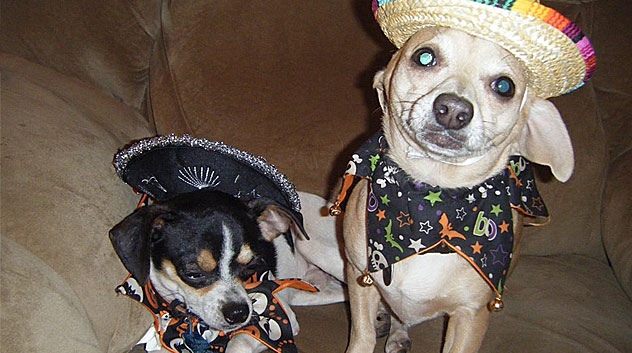 Sombrero Puppies!