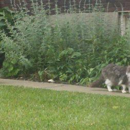 Two campus cats on Xavier University's campus in Cincinnati, OH