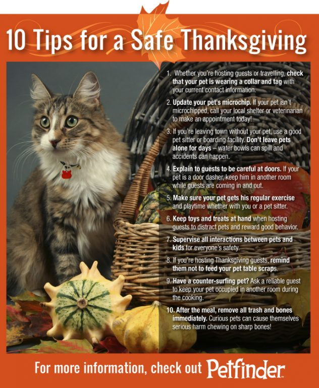 Cat with our top 10 tips for a safe Thanksgiving