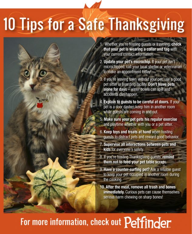 cat-thanksgiving-10-tips