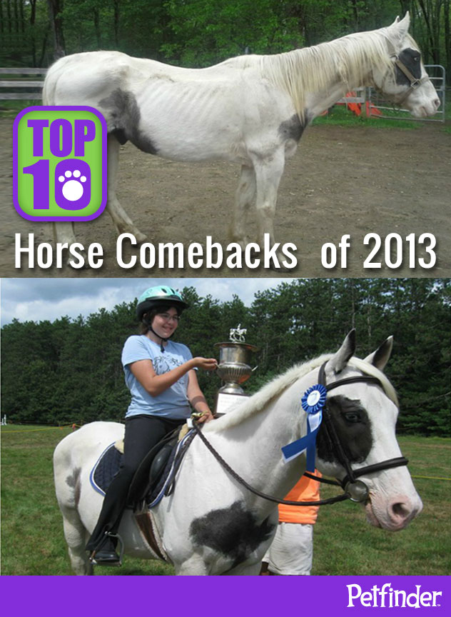 Top 10 Horse Comebacks of 2013