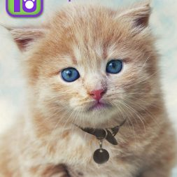Top 10 Kittens Making Adopt Me Faces in 2013