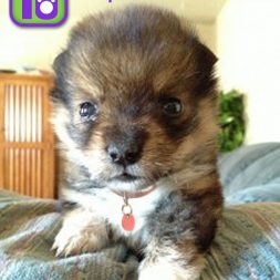 Top 10 Puppies Making Adopt Me Faces