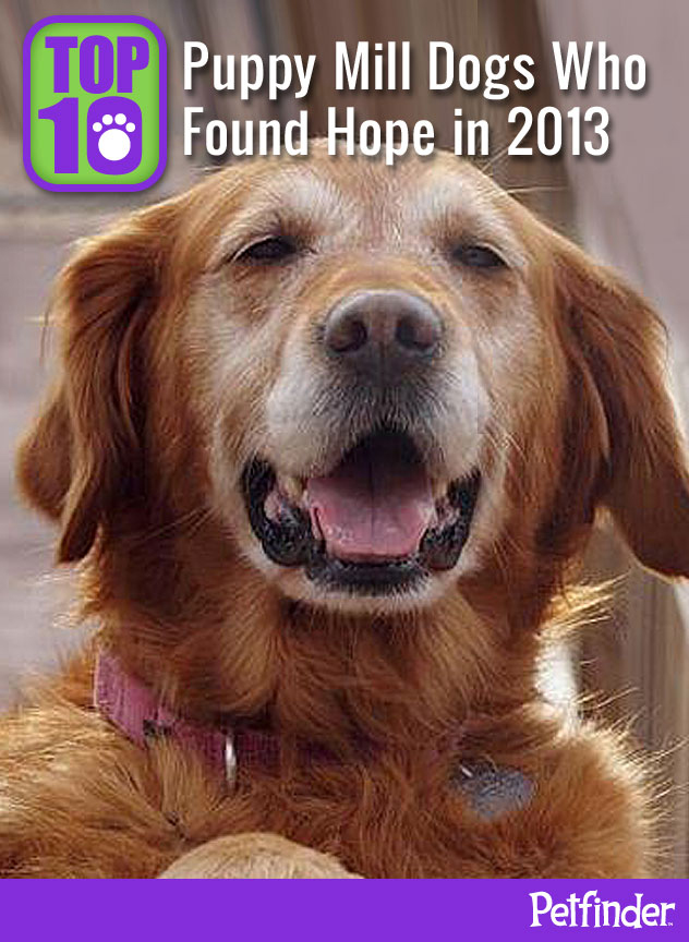 Top 10 Puppy Mill Dogs Who Found Hope in 2013