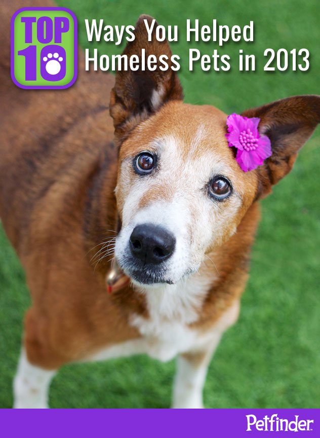 Top 10 Ways You Helped Homeless Pets in 2013