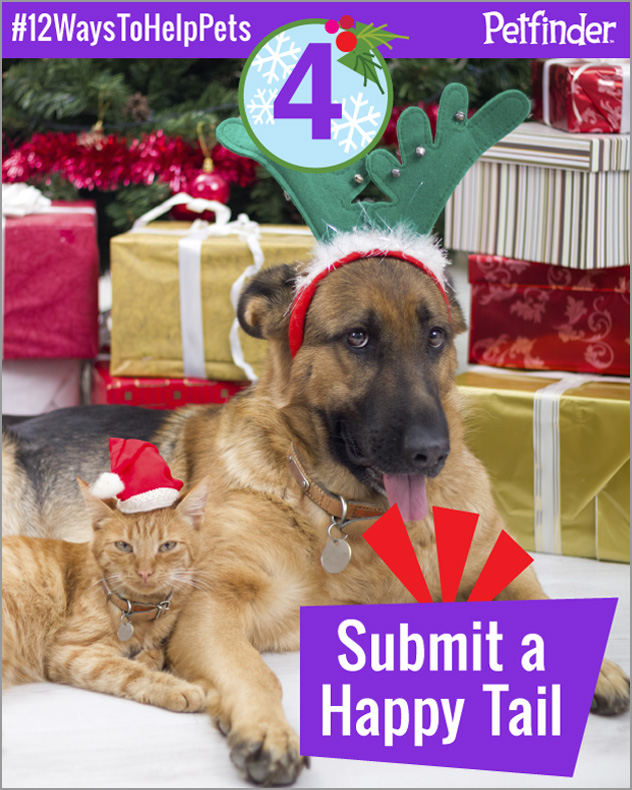 cat-dog-12-ways-to-help-pets-day-4