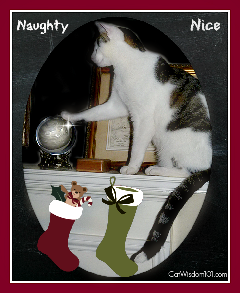 catmas ball naughty or nice