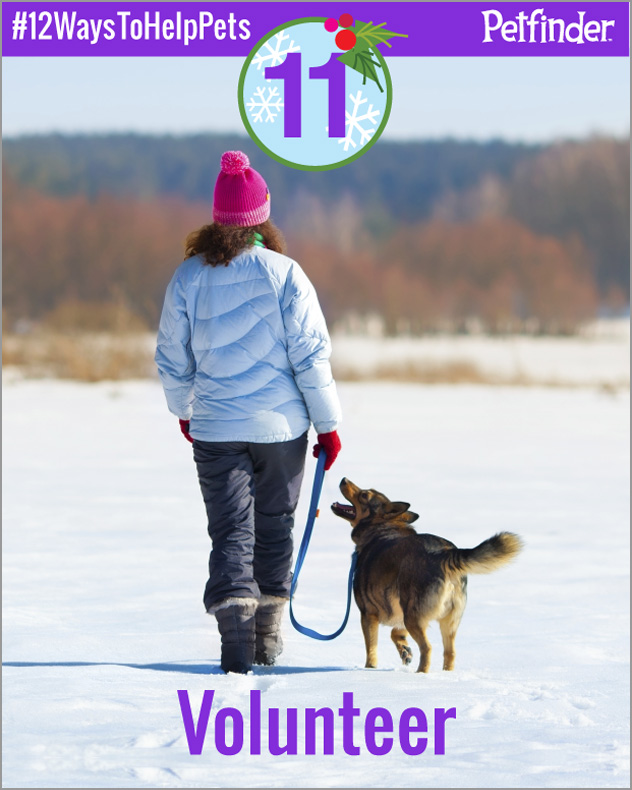 dog-12-ways-to-help-pets-day-11
