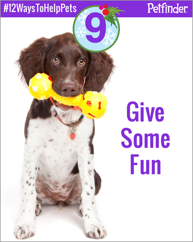 dog-12-ways-to-help-pets-day-9