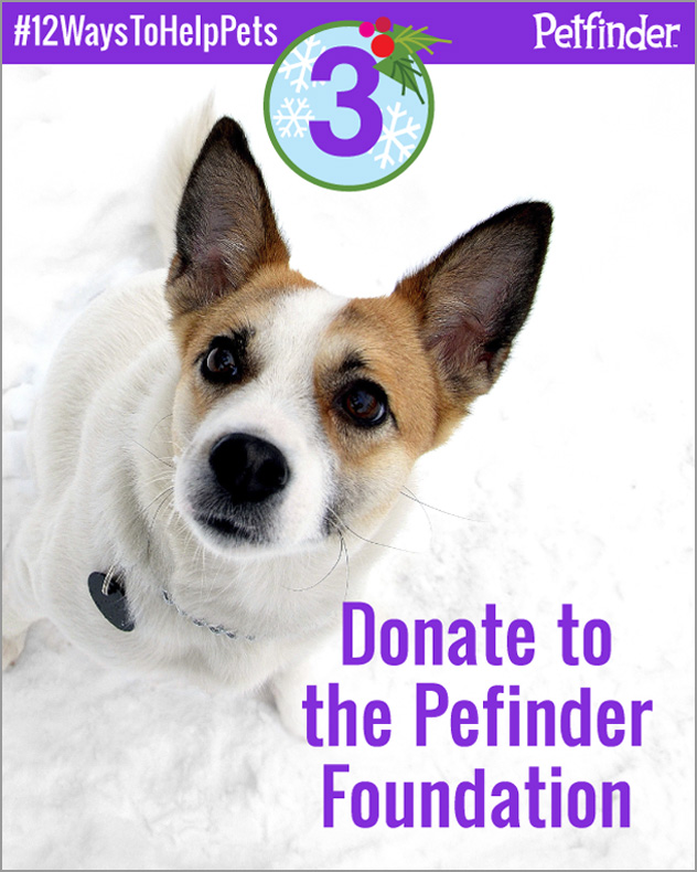 Dog looking up asking you to donate to the Petfinder Foundation