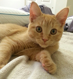 Pumpkin is ready to leap into action, bringing lots of laughs to his new family.