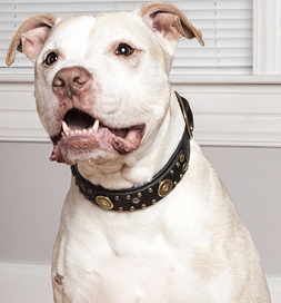 Learn why Petfinder believes all dogs should wear collars and tags.