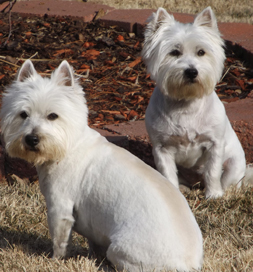 Winston and Reba hang out in the back yard.
