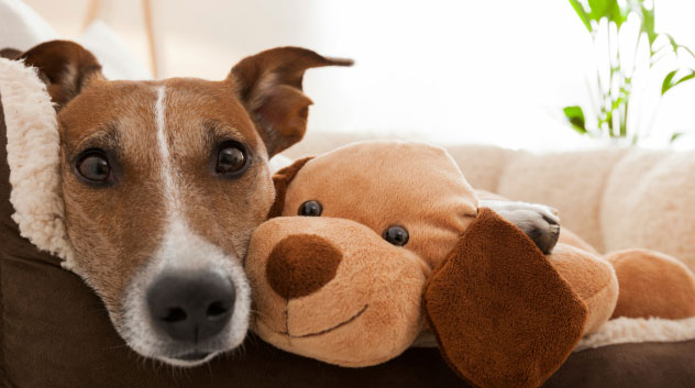 dog snuggling with stuffed dog