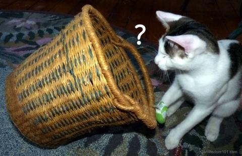 cat -waste basket hazard