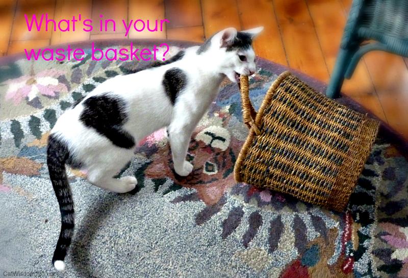 cat-waste basket hazard
