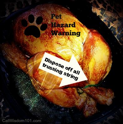petfinder-chicken-hazard