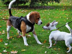 Dogs Socializing