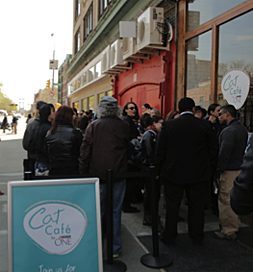 People eagerly wait for the doors to open at the Cat Cafe.