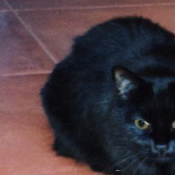 Gall Kitty