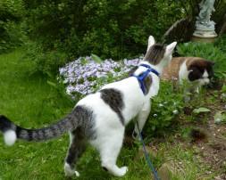 cat looking at bushes