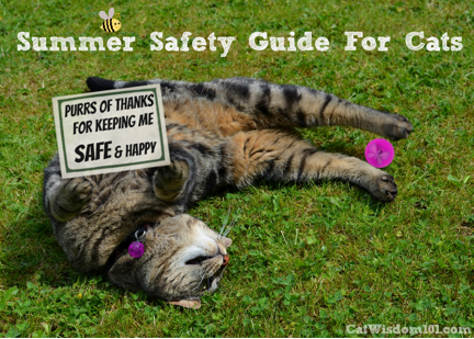 Summer Guide for Cats