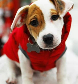 Clyde's puffy red coat kept him warm during a cold Michigan winter.