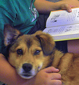 dog-adoption-corgi-rosie-conover1