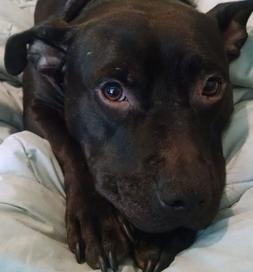 Frankie is as sweet as he is cute.