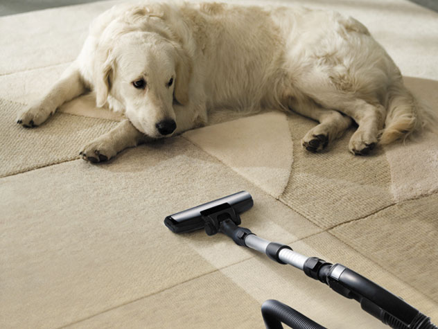 labrador dog by a vacuum cleaner
