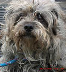 Rocky's shelter photo shows a woebegone little dog.