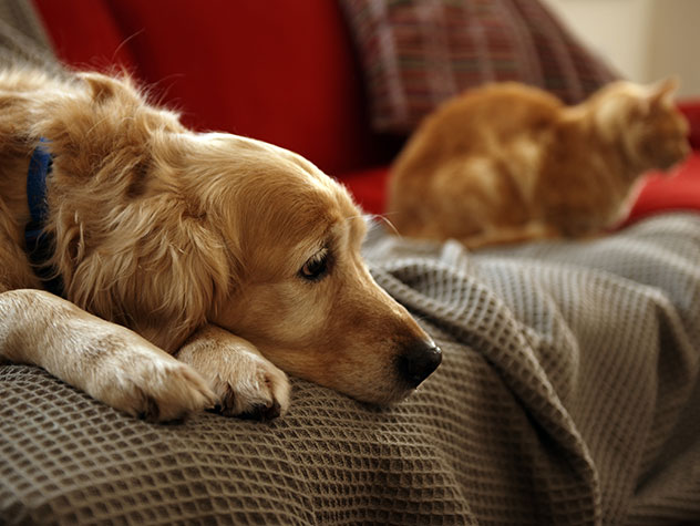 keeping-your-pet-calm-during-summer-storms