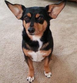 Barkley is all ears.