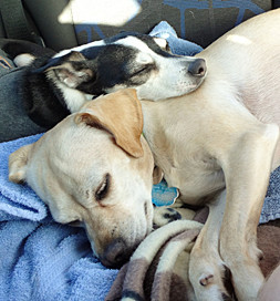 """Twix and Beignet chill after a game of """"Frankensteining."""""""