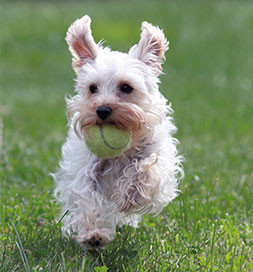 dog_tennisball