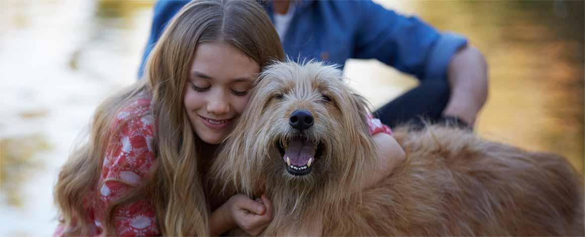 Celebrating Over 20 Years Of Pet Adoption Petfinder