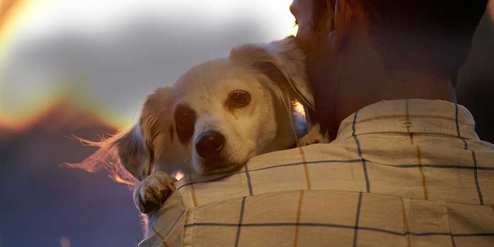 Man holding his dog on his shoulder in the early evening