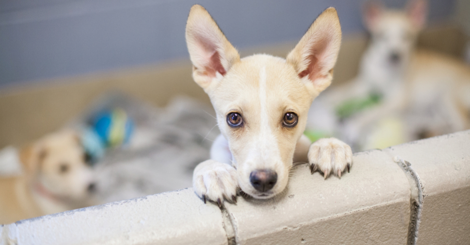 Adoptable dogs and puppies for sale can be adopted from shelter organizations and rescue groups for a minimal adoption fee.