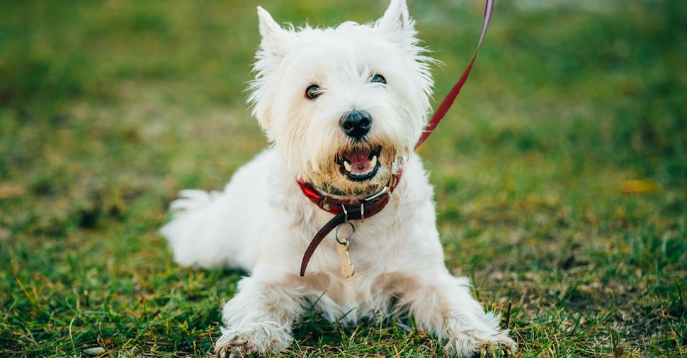 Bringing A Dog Home | Petfinder