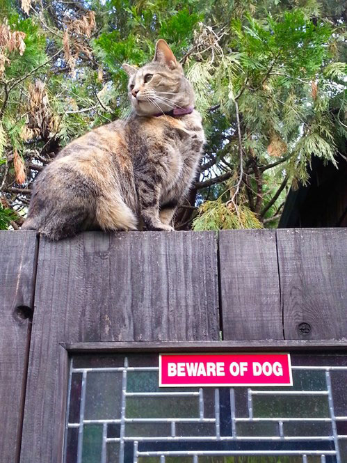 cat sitting on top of a fence