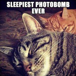 Sleepiest photobomb ever