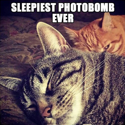 Sleepiest photobomb ever