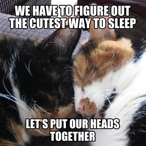 We have to figure out the cutest way to sleep. Let's put our heads together.