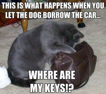 This is what happens when you let the dog borrow the car...where are my keys?