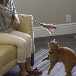 orange cat playing with a feather wand